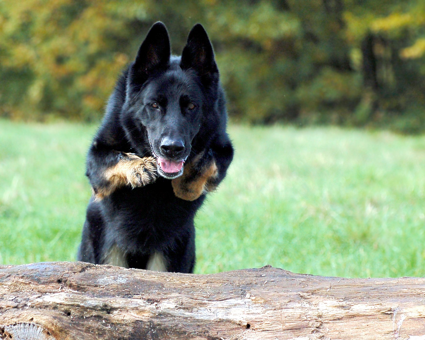 training takes place at the Dog Training Establishment, Keston, Kent