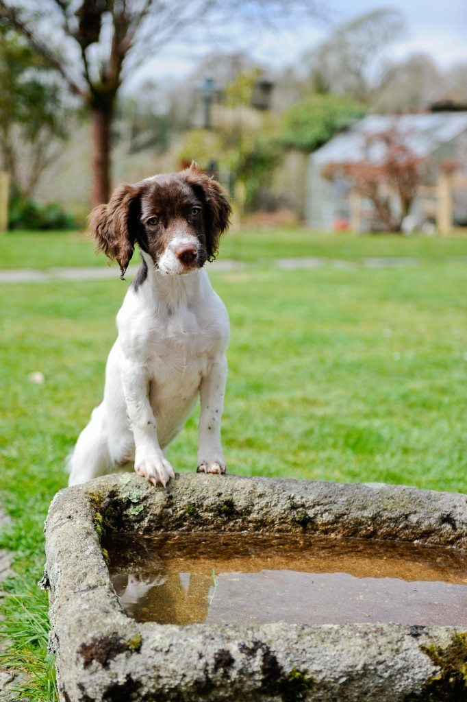 Scent Training For Dogs Uk