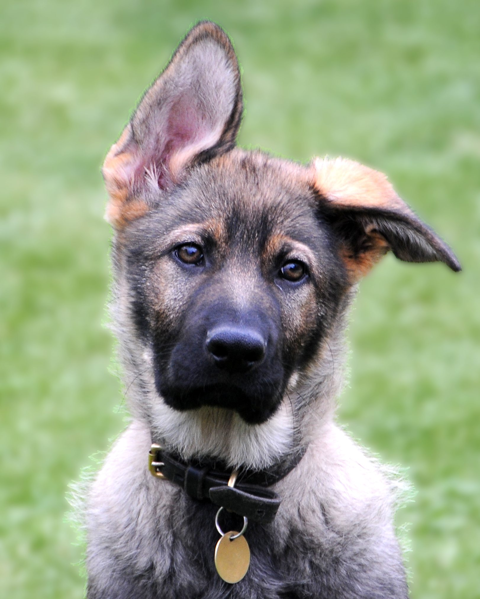 Police Dog Training Cost