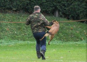 'General Purpose' Police Dogs - Regan's Dog Training
