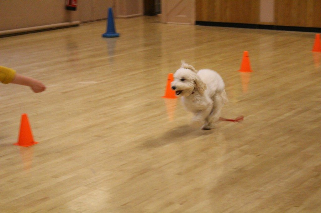 'Clever Dogs Training Club' - 03.06 (246)