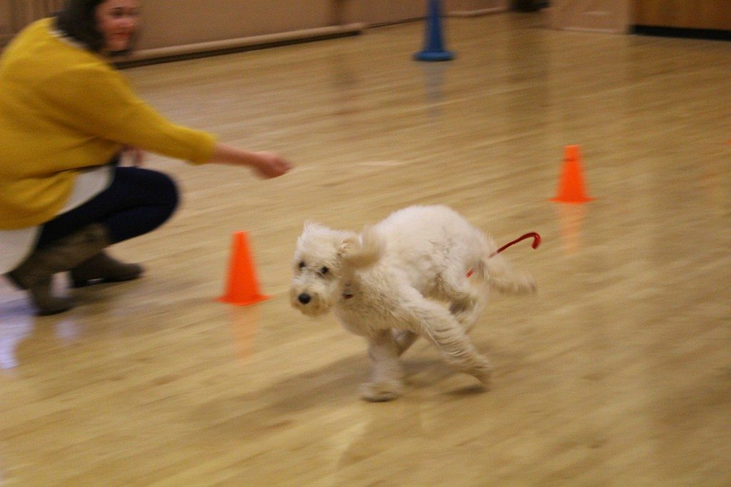 'Clever Dogs Training Club' - 03.06 (247)