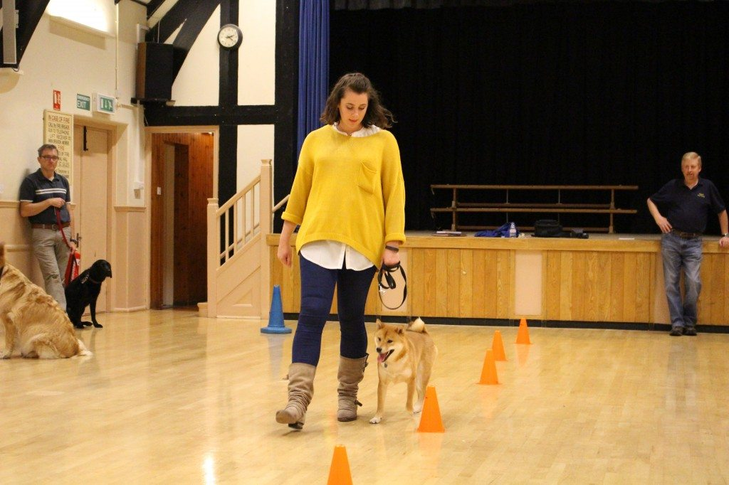 'Clever Dogs Training Club' - 03.06 (479)