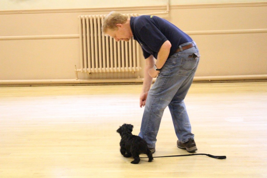 'Clever Dogs Training Club' - 03.06 (83)