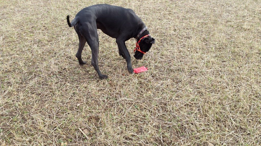 Magic showing that even Great Danes can love the game!