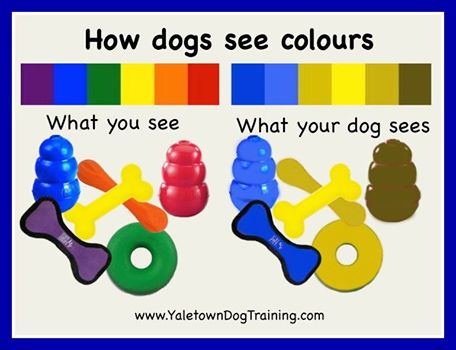 How dogs see colour