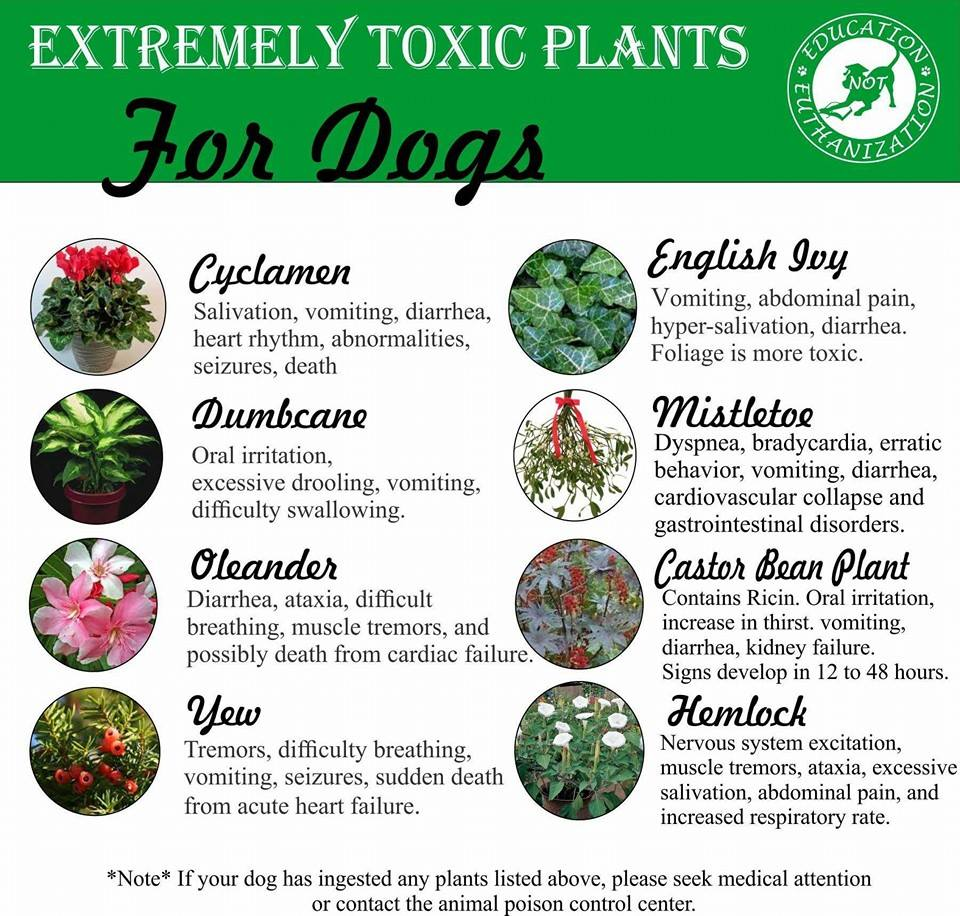 Toxic Plants For Dogs Uk