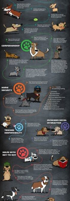 Benefits of Owning  a Dog